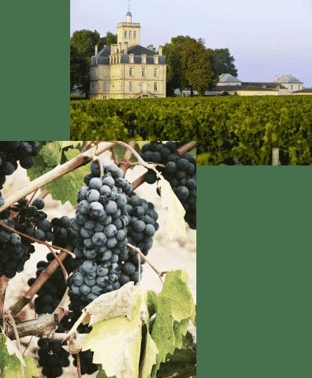 wine-tour-medoc-sur-mesure-pascal