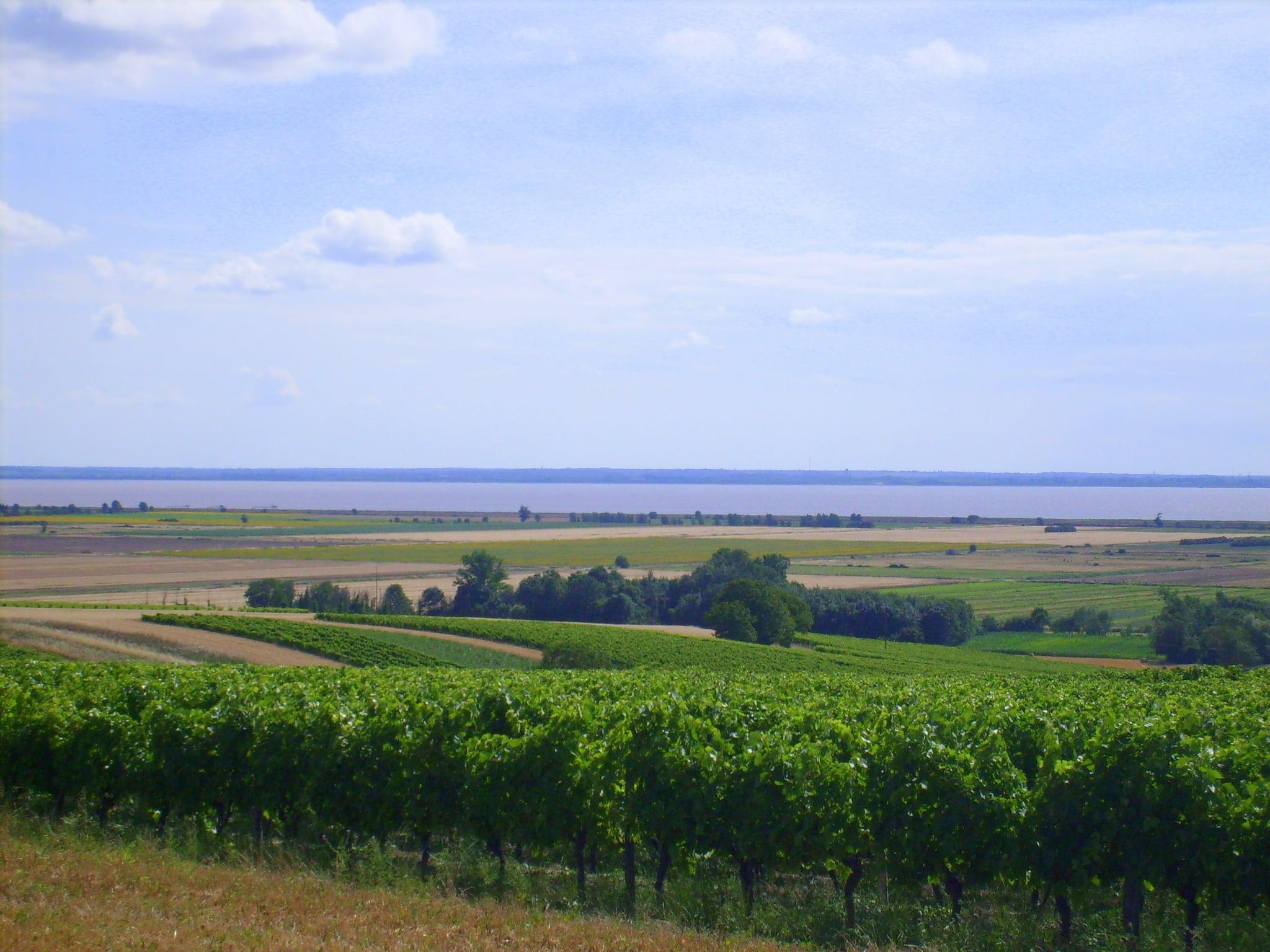 La_Gironde_à_Saint-Bonnet-sur-Gironde