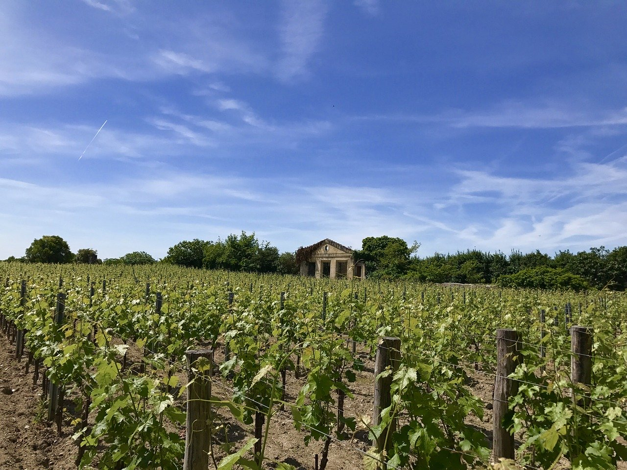 saint-emilion-vignoble-tour
