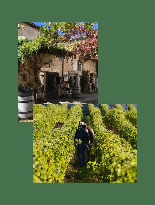 st-em-vigne-vin-compressor