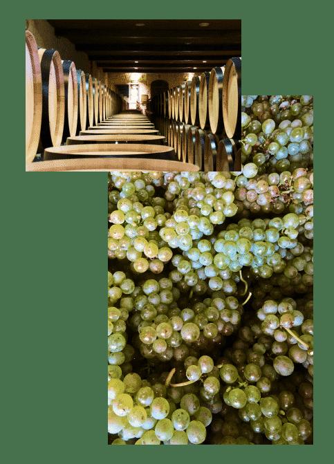 Vigne et tonneau lors d'un Wine tour à Bordeaux