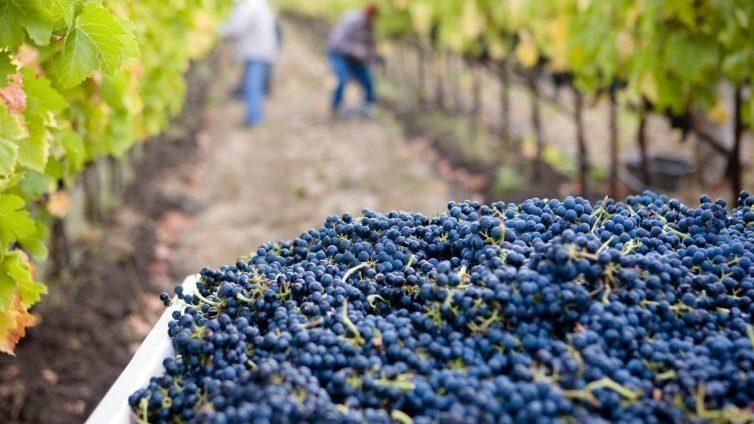 wine-tour-avec-vigneron-bordeaux